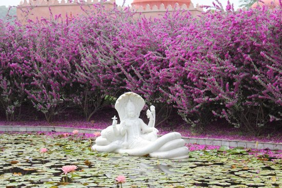 Tree of Life Resort & Spa Jaipur : The Lily Pond