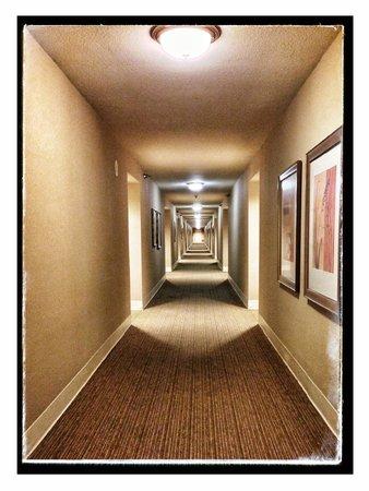 Monte Carlo Resort & Casino: The hallway to my room on the 21st floor