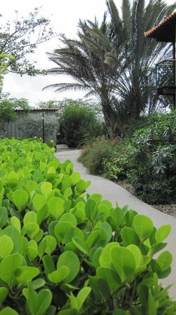 Windsock Apartments & Beach: Lush Windsock garden pathway