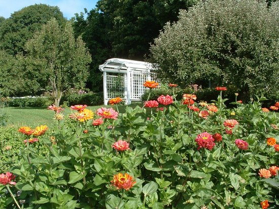 Bunker Hill Inn: Zinnias and the Garden Trellis