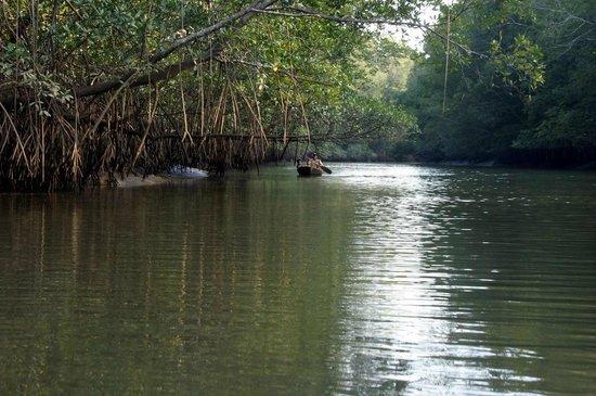 Finca Buena Vista: Mangroven-Tour