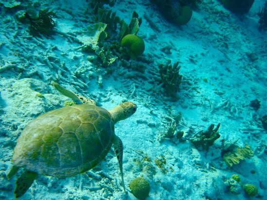 Woodwind Sailing & Guided Snorkel: sea turtles and crystal clear water