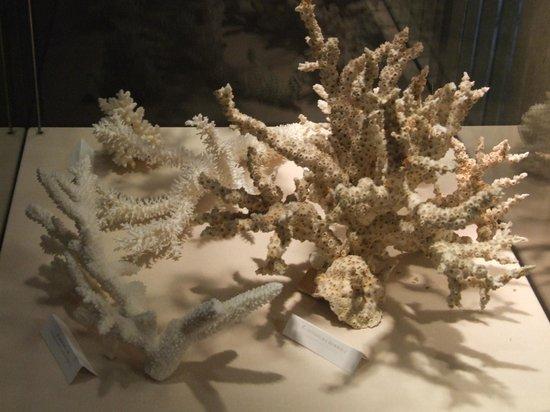 Aquarium et Musee de Zoologie (Aquarium and Zoological Museum): Corals