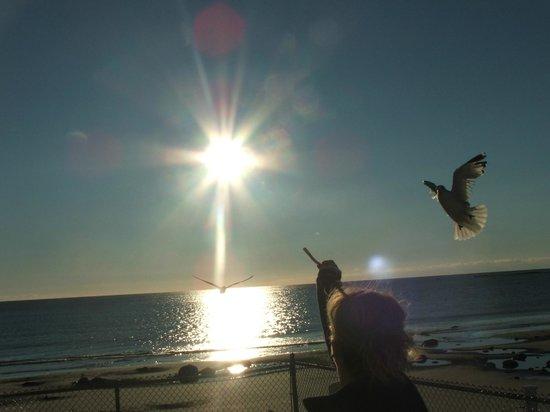 Lafayette's Oceanfront Resort : Wonderful view