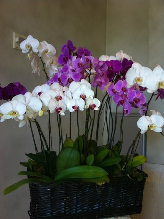 Loews Royal Pacific Resort at Universal Orlando: Orchids in Lobby