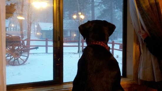 Big Bear Frontier Cabins & Hotel: Aspen wanting to play in the snow
