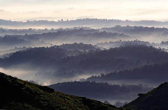 Thadiyandamol Hills Coorg Top Tips Before You Go