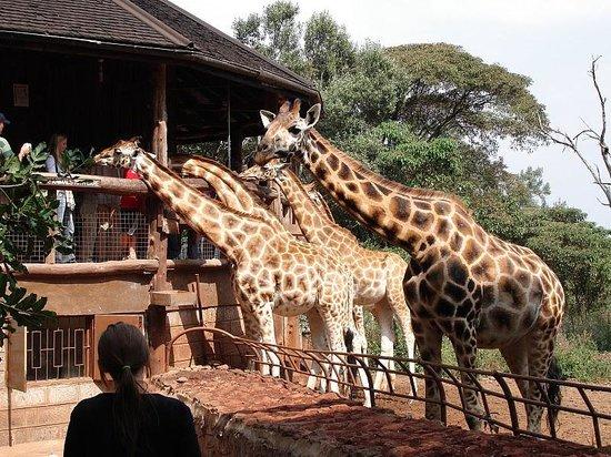 Half-Day Walking Tour: Nairobi Experience Photo