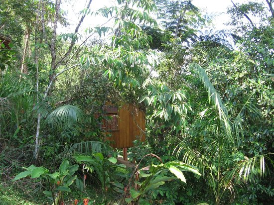 Copalinga: Little cabin in the woods
