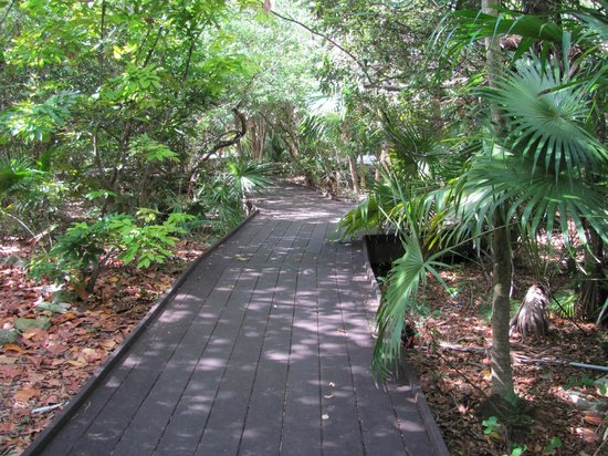 Key West Tropical Forest And Botanical Garden: Elevated Trail