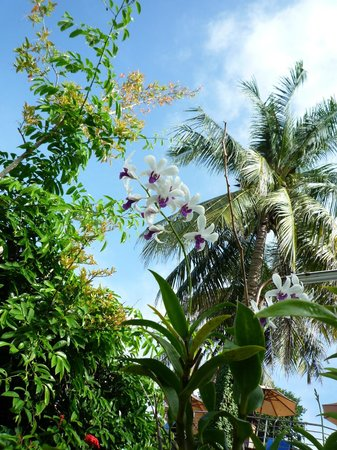 Orchidacea Resort: Hotel garden