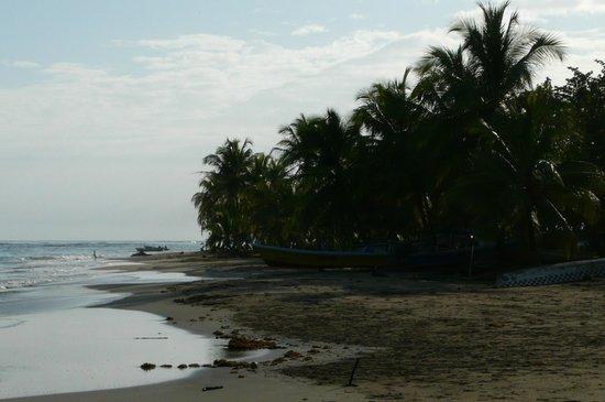 Bucus Tours: A beach