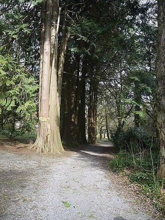 Woodstock House and Gardens: Giant redwoods