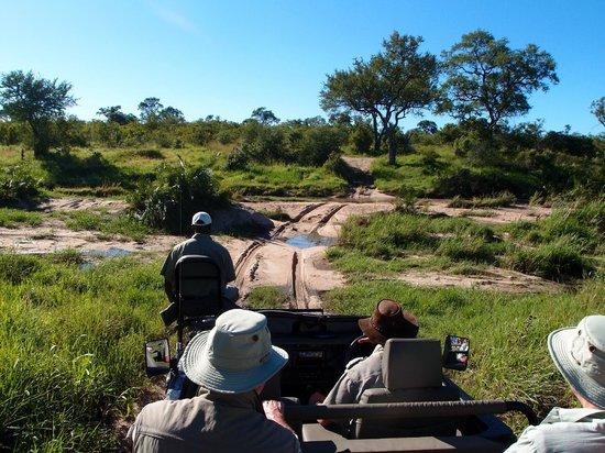 Elephant Plains Game Lodge: on safari