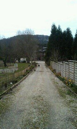 Villa Mon Repos : Oprijlaan met hond & kat die ons verwelkomen.