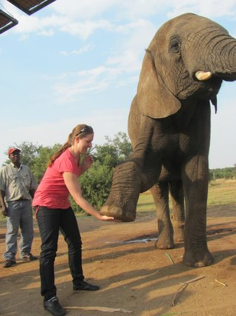 Adventures with Elephants: Giving an elephant a high five
