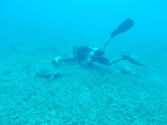 Fantasea Dive - Diving & Adventures : Jason filming a turle.