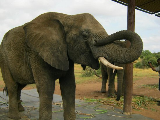 Adventures with Elephants: one of the elephants of our interaction