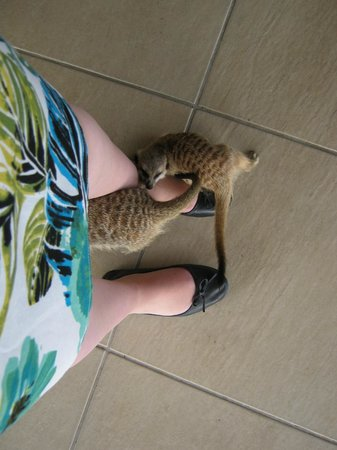 Adventures with Elephants: Timon and Trouble the meerkats