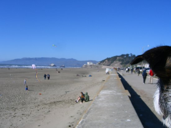 Beach Chalet: view of the beach arcoss the street
