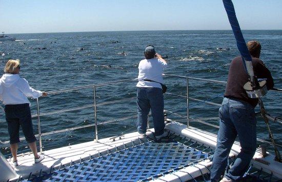 Дана-Пойнт, Калифорния: Netting on front of catamaran gives you spectacular view!