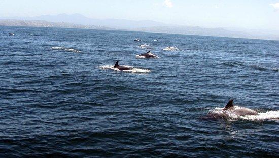 Dana Point, Kalifornien: Huge pod of dolphins.
