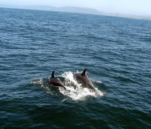 Dana Point, Kalifornien: Mama and baby come alongside.