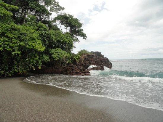 Drake Bay, Costa Rica: Humpback whale