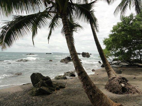 Drake Bay, Costa Rica: Beach where we ate