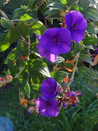 Boquete Garden Inn: Blooms are every where!
