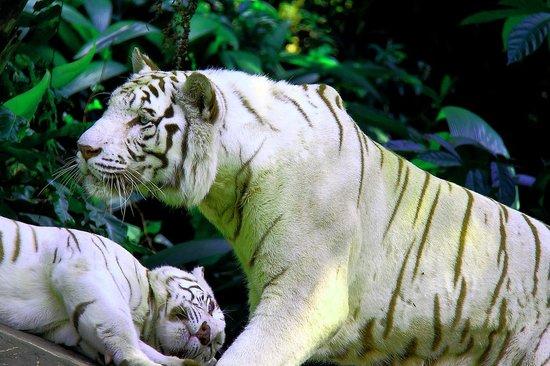 Banjarmasin Zoo