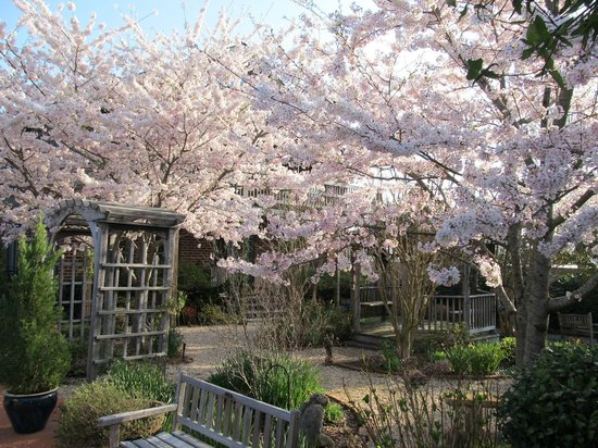 Cherry blossoms at Monteagle Inn & Retreat Center