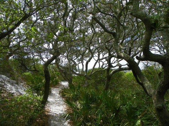 Grayton Beach State Park: Grayton Beach