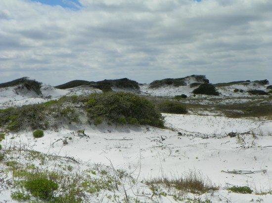 Grayton Beach State Park: Grayton Beach Dunes