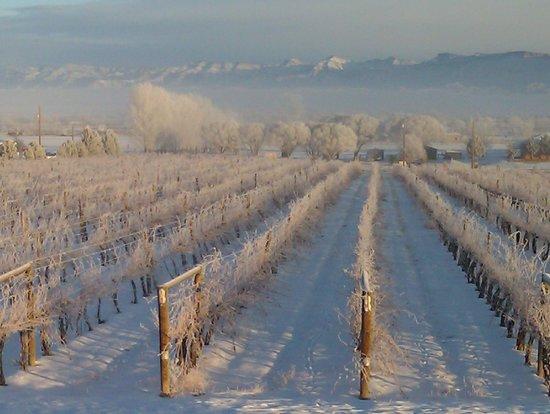 Grand Junction, CO: winter wonderland!