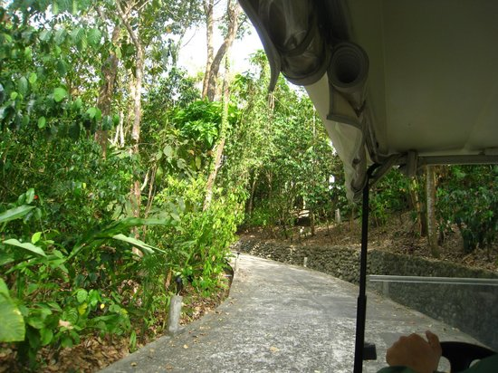 Arenas del Mar Beachfront & Rainforest Resort: view of the road that goes throughout the property