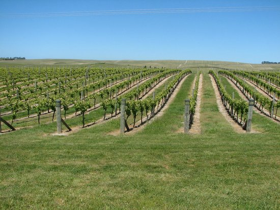 Blenheim, New Zealand: Marlborough Region - Wine Capital of New Zealand