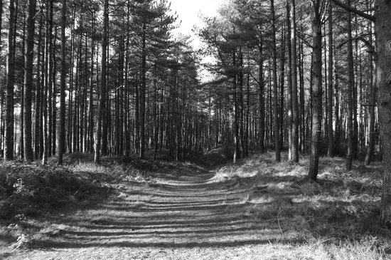 Pembrey Country Park: Not back in the day, just a B&W shot.