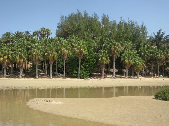 Playa Sotavento - Picture of Playa de Sotavento, Playa de Jandia - TripAdvisor