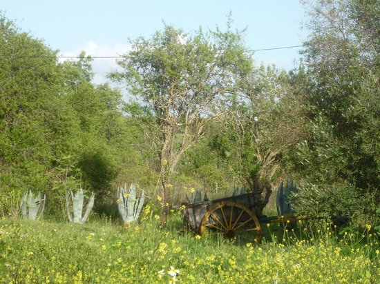 Casa Amarela : B&B is situated in rural environment, entrance is at this cart