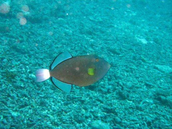 My Scuba Diver's Mabul Homestay : Diving at Sipadan