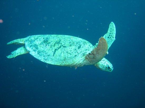 My Scuba Diver's Mabul Homestay: Diving at Sipadan