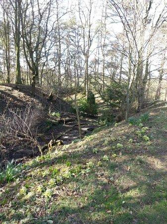 Ogle Castle Bed & Breakfast: Remains of moat