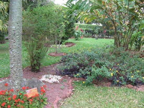 Hotel La Rosa de America : The lovely gardens
