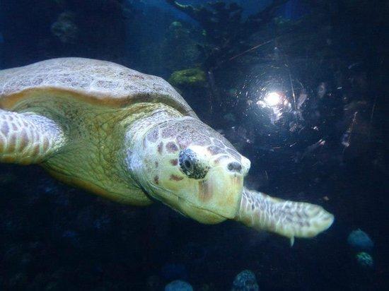 Boston Aquarium Prices