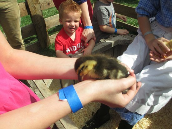 American West Heritage Center: Duckling
