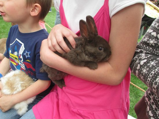American West Heritage Center: Baby Bunny
