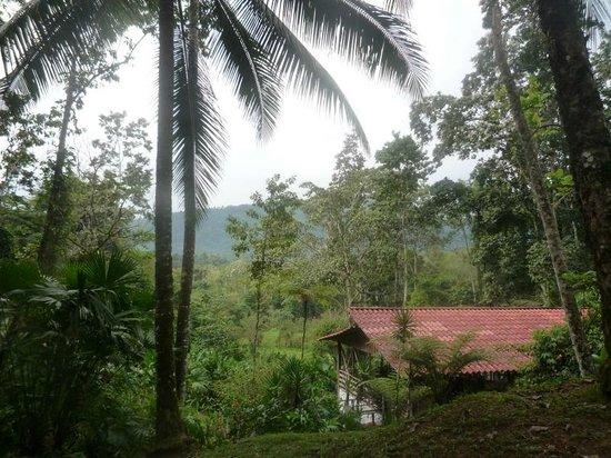 写真Selva Bananito Lodge枚