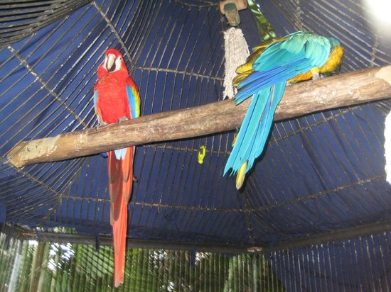 Couples Tower Isle: The Macaws at the resort