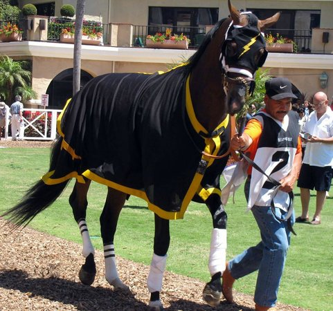Del Mar Race Track: In the paddock